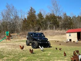 chickens and jeep